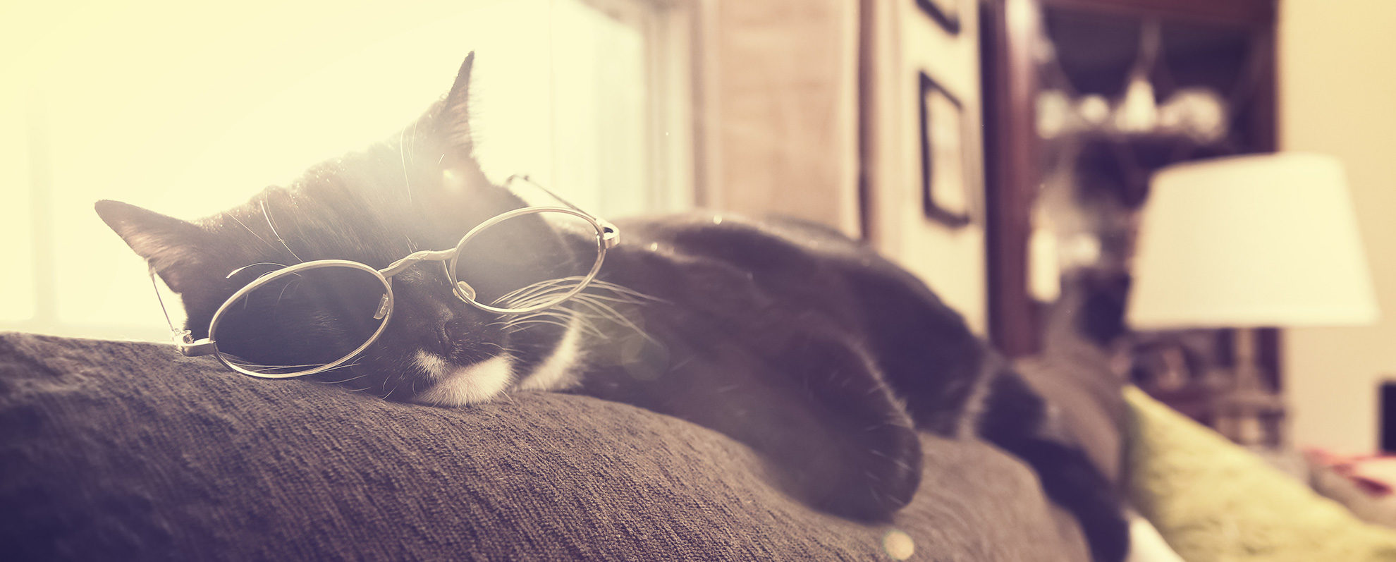 black cat wearing wire glasses frames and napping